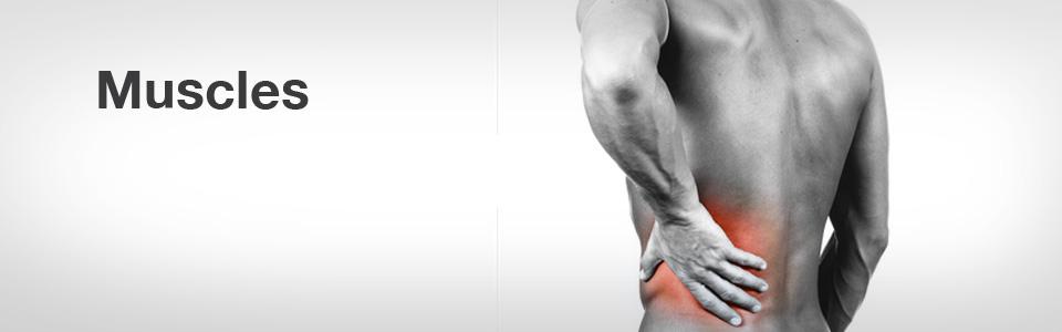 fauteuil-massage-bienfaits-muscles